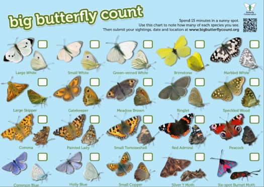 bigbutterflycountchart