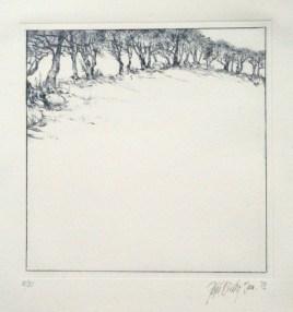 hawthorn hedge 5. 21