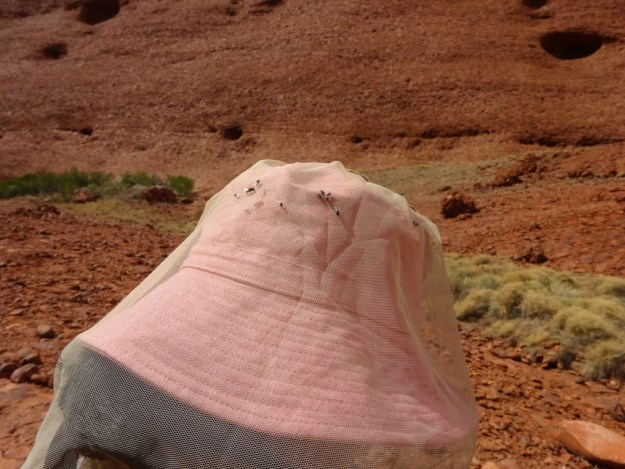 fly nets in uluru are essential