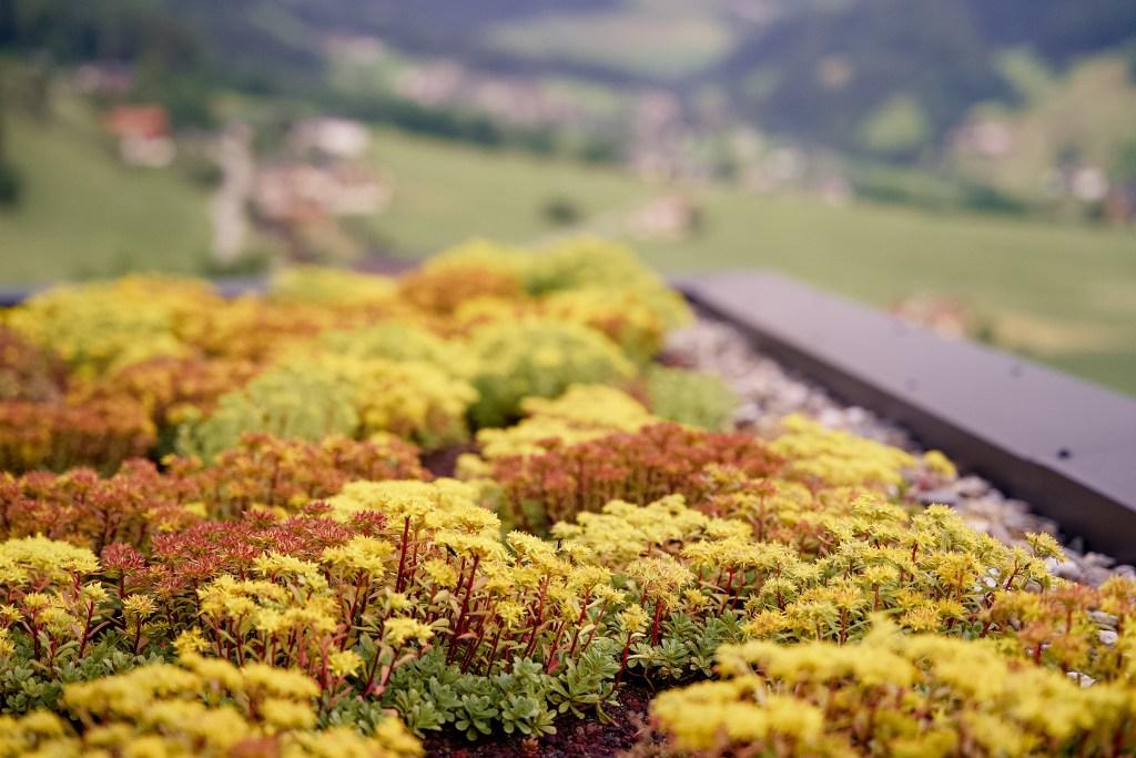 Pflege von Flachdach- und Terrassengärten