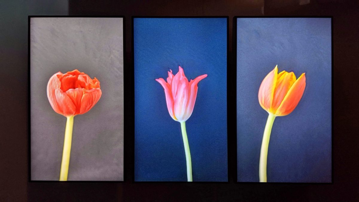 Three AI-generated tulips