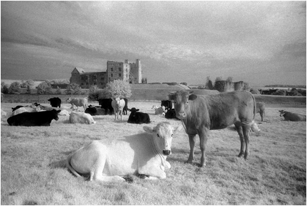 Cattle and castle.