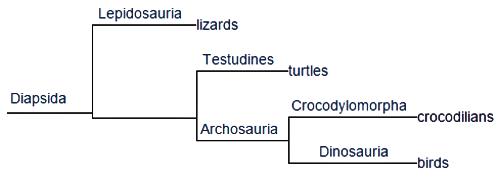 Cladogram