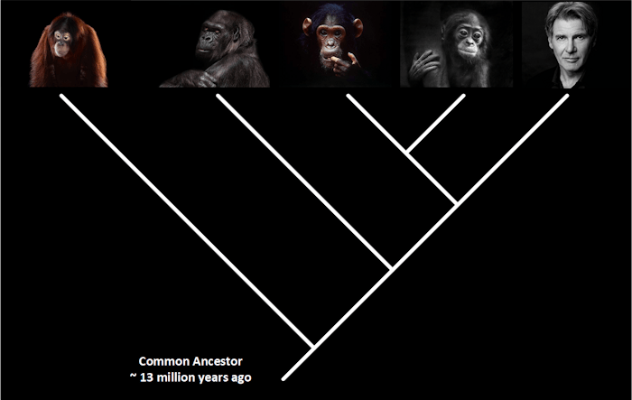 Great Apes Common Ancestor
