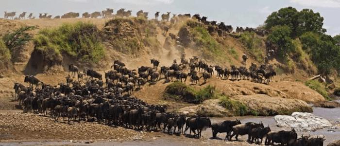 Data Migration (under GNU Manifesto)