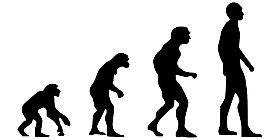종속과목강문계 인간의 진화