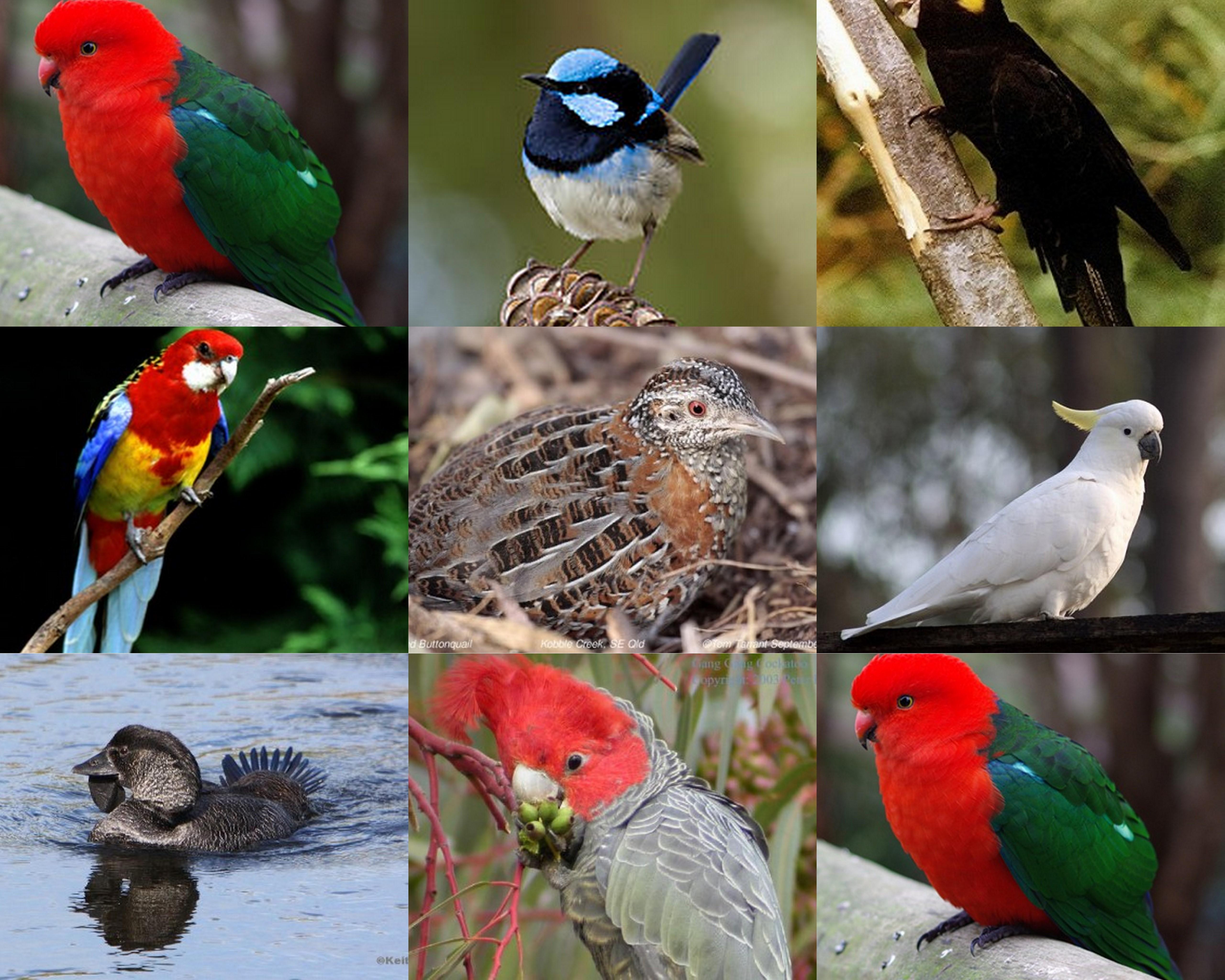 Bird Species At Gundungurra Bundanoon