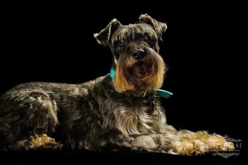 Pet photographer London - dogs