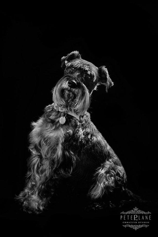 fine-art pet photographer London