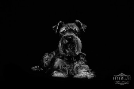fine-art pet photographer Kent Surrey
