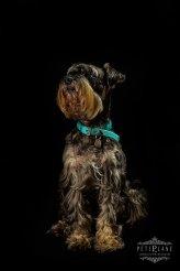 fine-art dog photographer Oxford Windsor