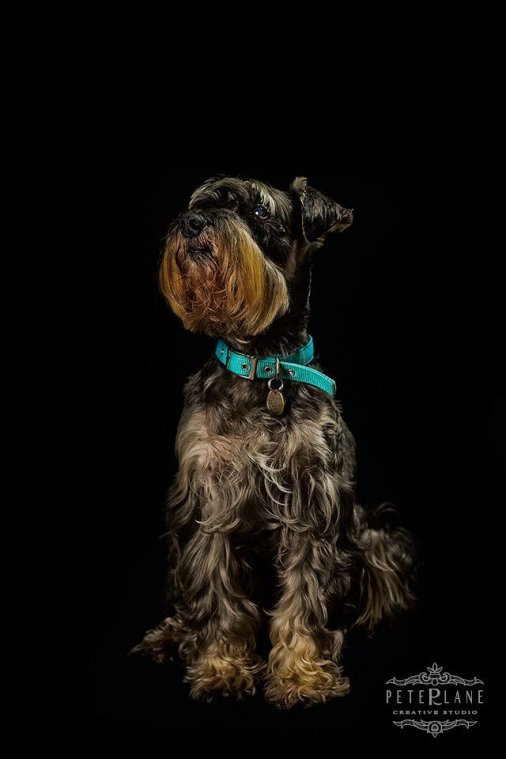 fine-art dog photographer Oxford Windsor