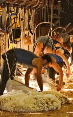 Shearers Ballet