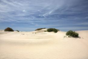 Cowell Dunes