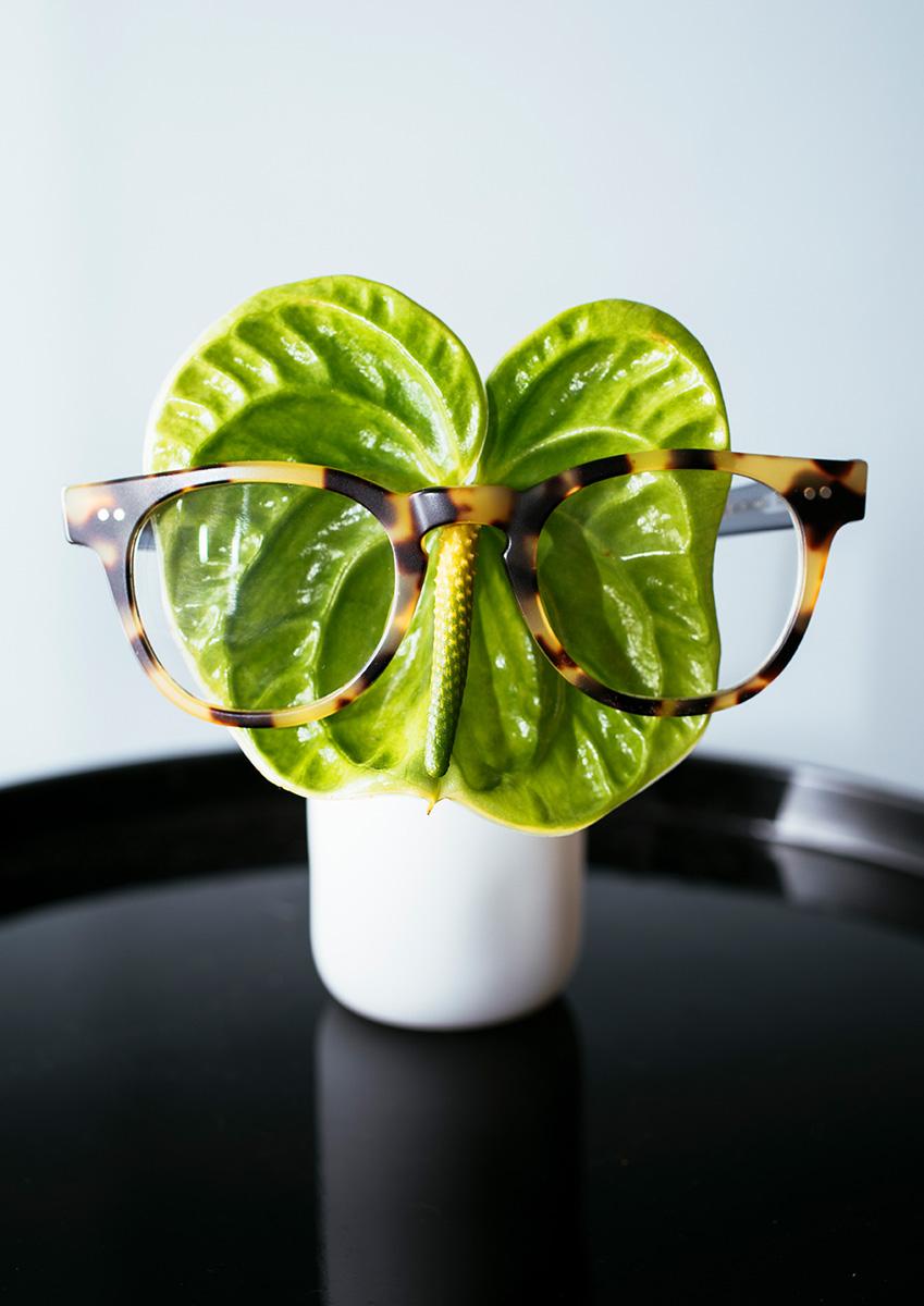 Anthurium Araceae