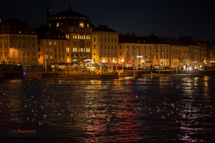 Fotograf Peter Ringström-FPR_5120