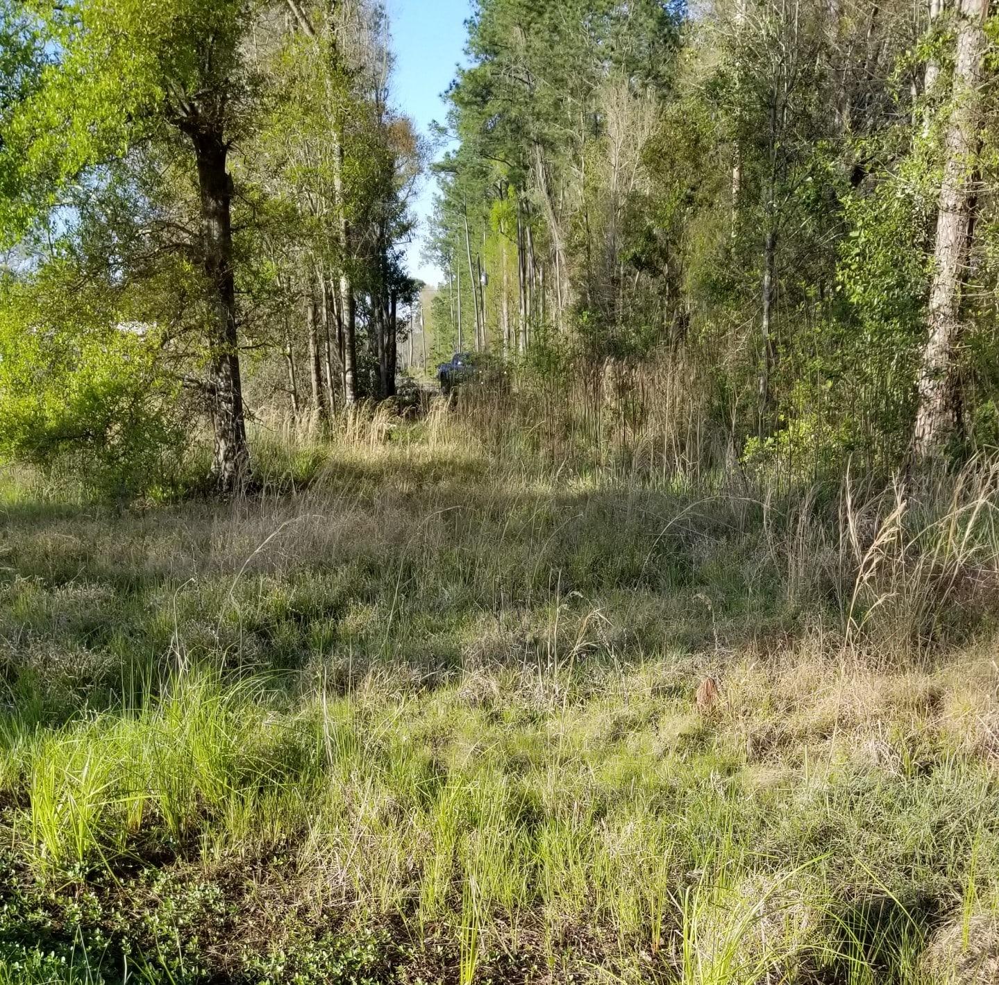 Lawtey, Bradford County, North Central, FL Land For Sale