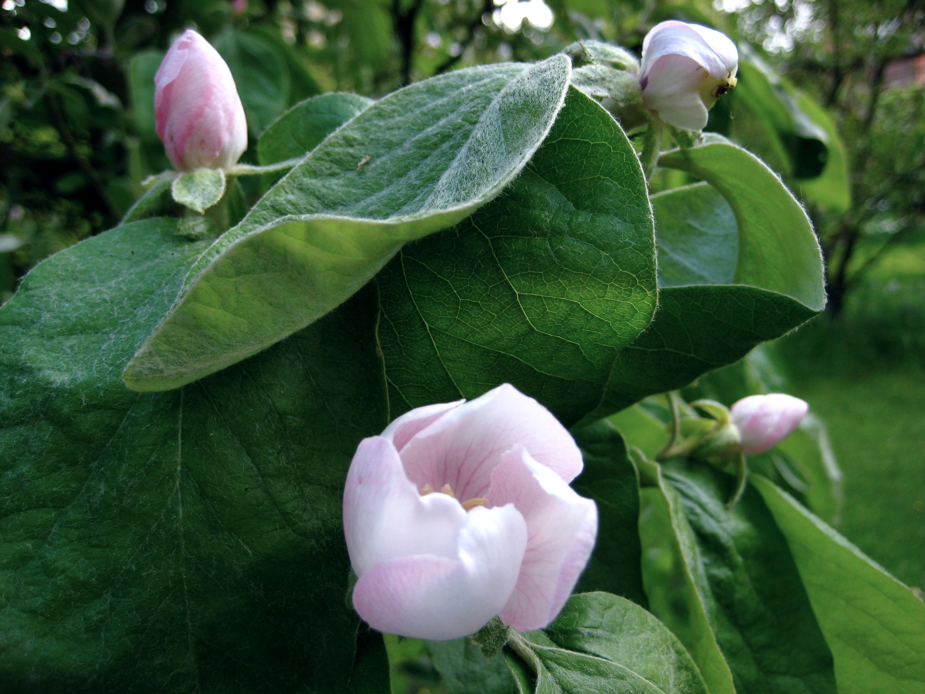 Blossoms in Shaws' Garden