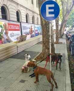 Buenos Aires Hunde, Parkplatz