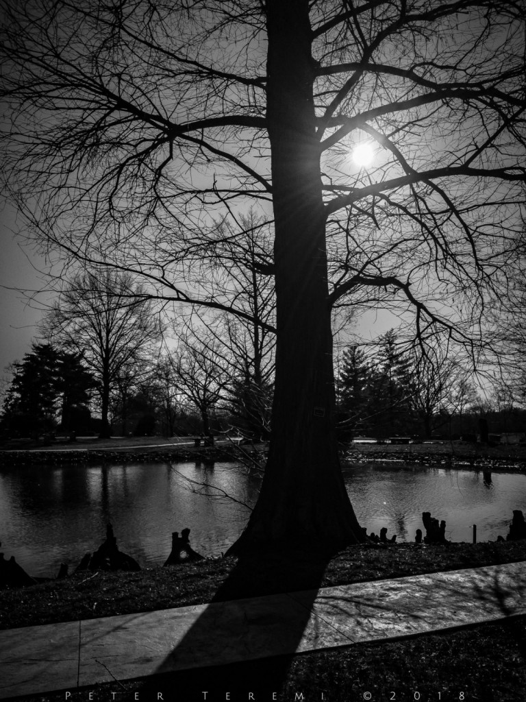 Trees at Woodlawn