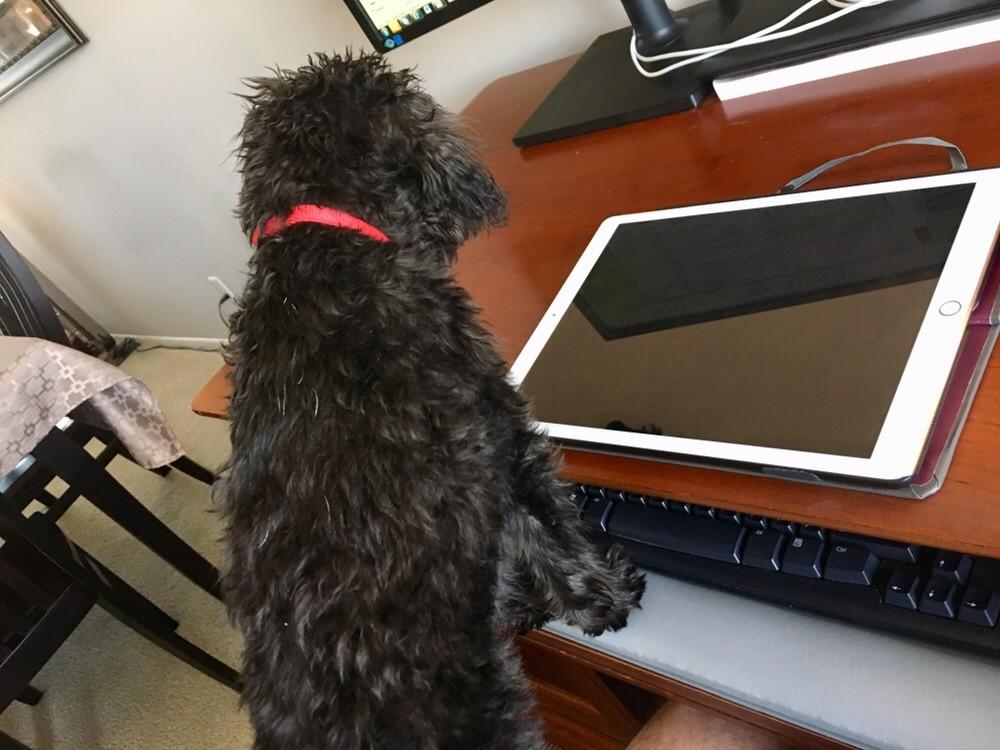 Working Dog