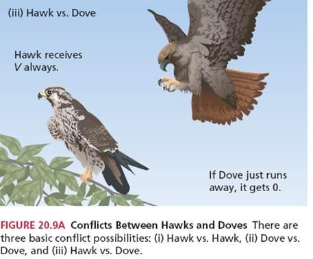 Hawk_Dove2