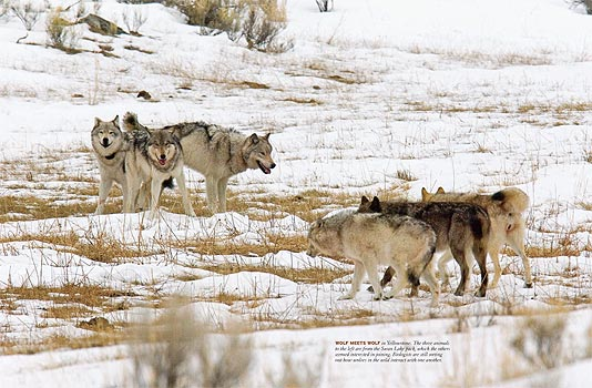 Wolves_FM07_spread3