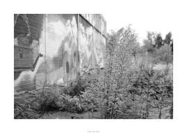 Nikon D90_29036__DSC0311-border