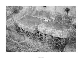 Nikon D90_29050__DSC0325-border