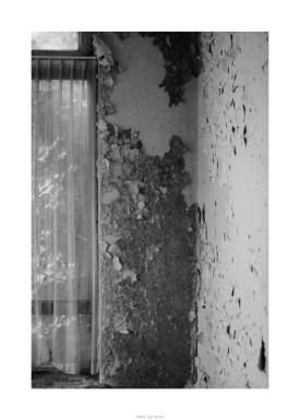 Nikon D90_29054__DSC0329-border