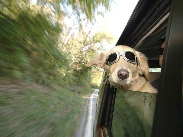 Pet Evac Pak Travel Kits
