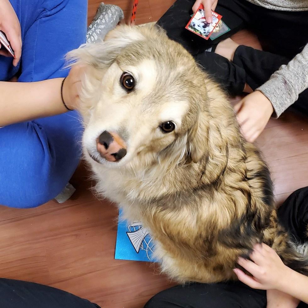 Therapy Dog Dash