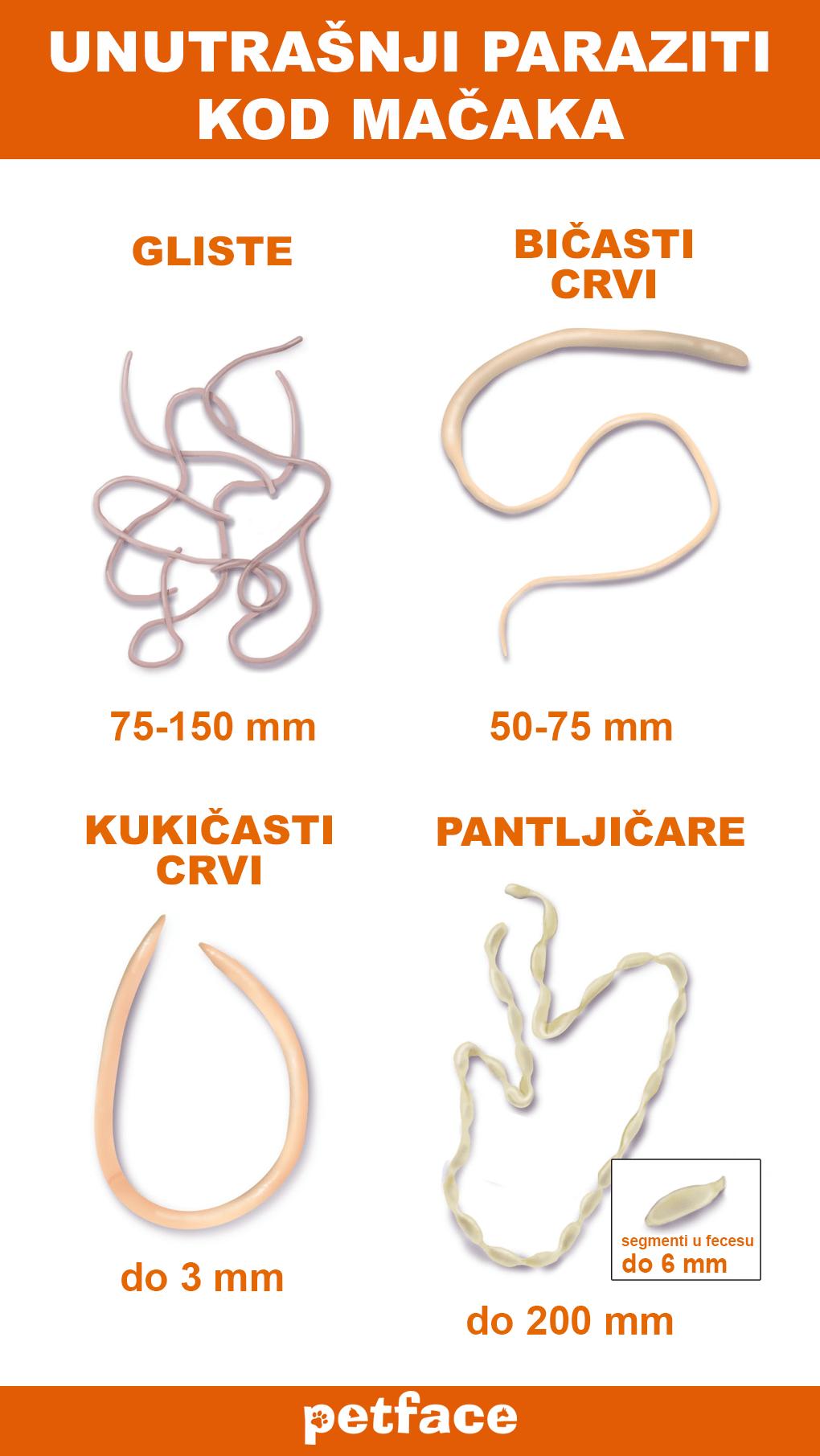 paraziti kod macke simptomi)