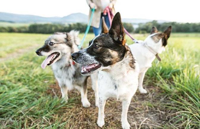 I meticci cani fantastici   Pet Family