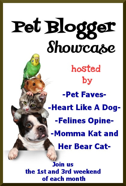 Pet Blogger Showcase
