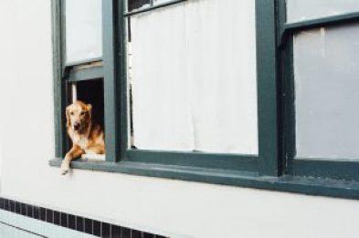 dog indoors exercise