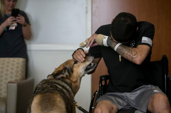 Wounded soldier & injured military dog are reunited, recovering together - Life With Dogs