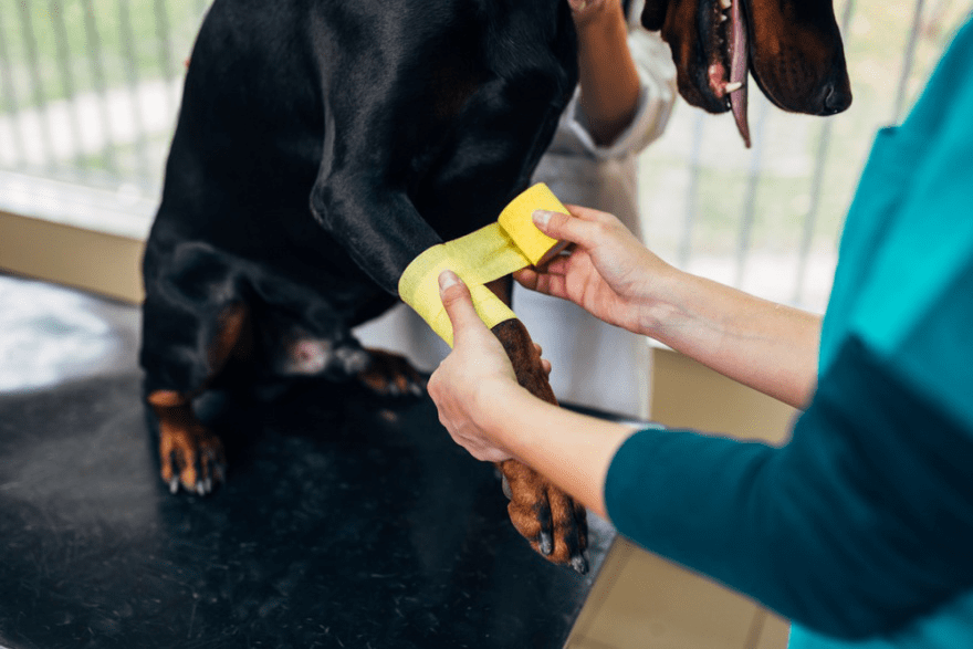 Best Dog Foods for Doberman Pinschers - LIFE WITH DOGS
