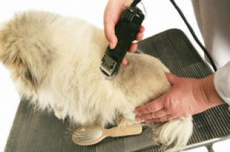 how to use dog clipper