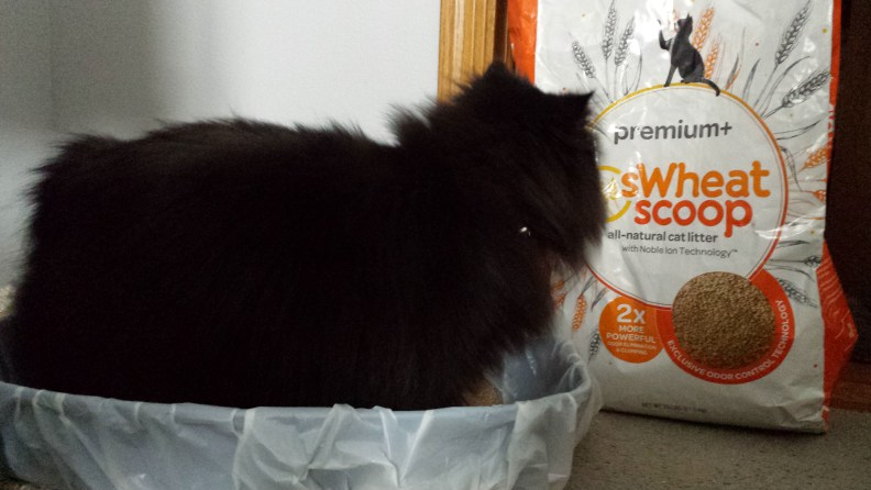 8 best flushable cat litter brands reviews - Cat Litter Reviews