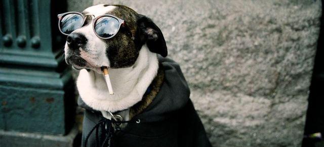 pas-i-cigareta
