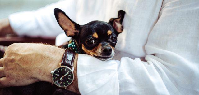 pas-u-naručju-sat-sačuvati-psa