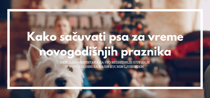 pas-nova-godina-sačuvati-psa
