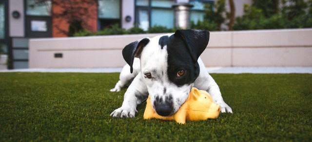 pas-i-igračka