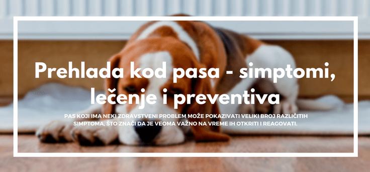 prehlada-kod-pasa-simptomi-lečenje-preventiva-pas-leži