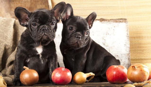 Smeju li psi da jedu luk