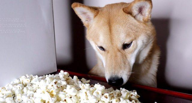 zašto psi ne smeju da jedu kokice