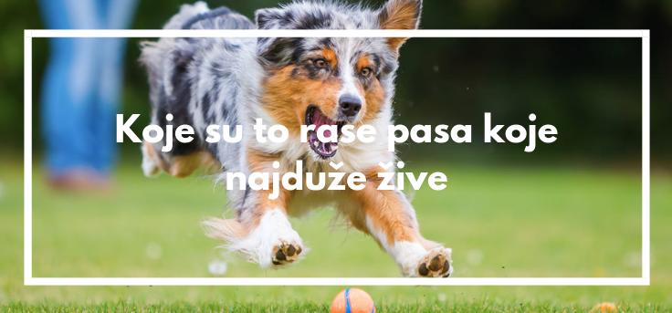 Koje su to rase pasa koje najduže žive
