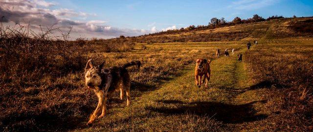 psi-trče-u-prirodi