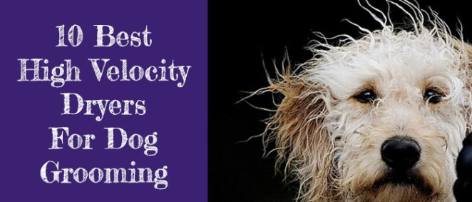 Best High Velocity Dryer for dog grooming